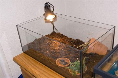 aquarium pour tortue pas cher aquarium pour tortue d eau pas cher