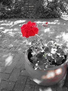 Schwarz Weiß Bilder Mit Rot : phantaphil weil die welt voller phantastischer dinge ist ~ A.2002-acura-tl-radio.info Haus und Dekorationen