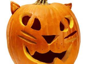 is pumpkin for cats 1000 ideas about cat pumpkin on pumpkin