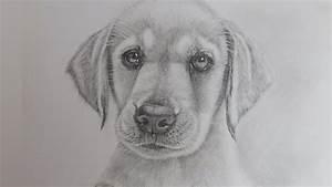 How to Draw a Realistic Puppy Dog Labrador Retriever - YouTube