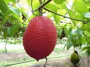 Image Gallery huaya fruit