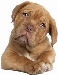 Cute Dog Pictures Free