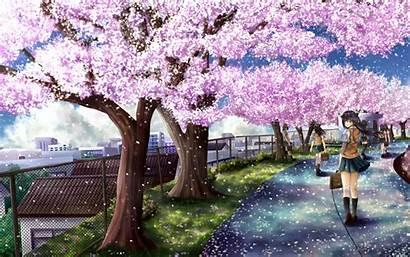 Sakura Wallpapers Anime Trees