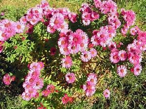 Blumen Für Garten : garten blumen pink der scheffehof ~ Frokenaadalensverden.com Haus und Dekorationen