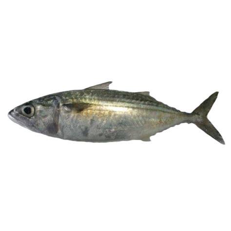 Rahim Wanita Bengkak 5 Jenis Ikan Patut Dielakkan Bagi Penderita Ekzema Gerd