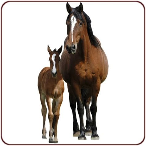 stickers chevaux pour chambre sticker chevaux achetez ce sticker chevaux pour votre