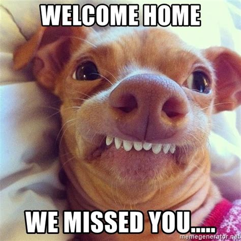 Welcome Home Meme - welcome home we missed you phteven dog meme generator