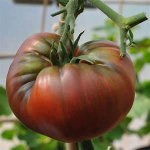 Tomato Seed 'Black Krim' (Heirloom Cordon Tomato)