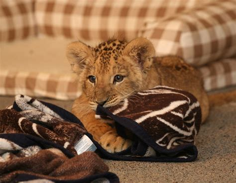 Exotic Animals Talented Animals Blog