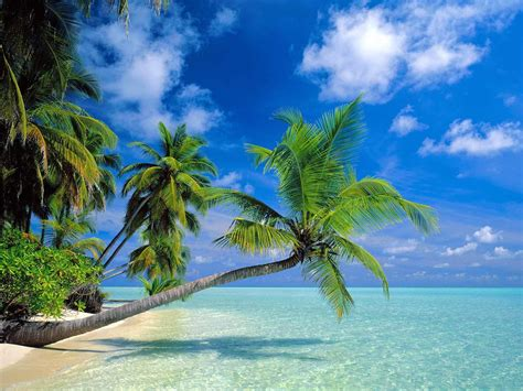 Zoom DiseÑo Y Fotografia Imagenes De Paraísos Tropicales