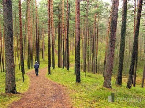 Ģimenes ārste Ilze Aizsilniece: pastaigas mežā stiprina ...