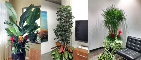 interior plant service interior plant service for the professional office