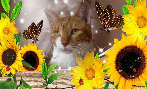 gatos  flores mowgly nani  cia