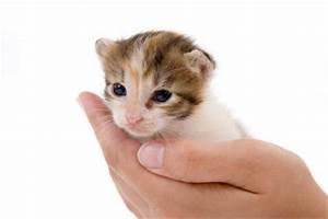 Katze Im Haus Halten : katze trotz allergie halten wichtige hinweise ~ Lizthompson.info Haus und Dekorationen
