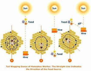 Made in Drumroe: Honey Bee Waggle Dance Diagram | Bee ...