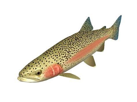 steelhead trout  model ds max files