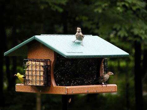 wild birds unlimited all in one bird feeder at wild birds
