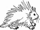 Porcupine Coloring Pages Prickly sketch template