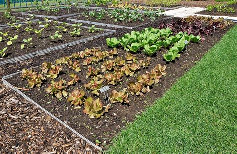 how to plant a vegetable garden how to plant a vegetable garden simple steps for beginner