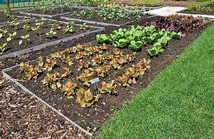 how to plant a vegetable garden simple steps for beginner With things to plant in a vegetable garden