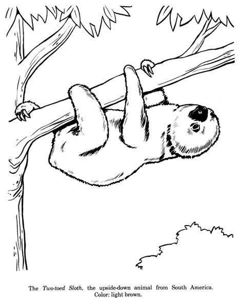 sloth coloring page coloring home