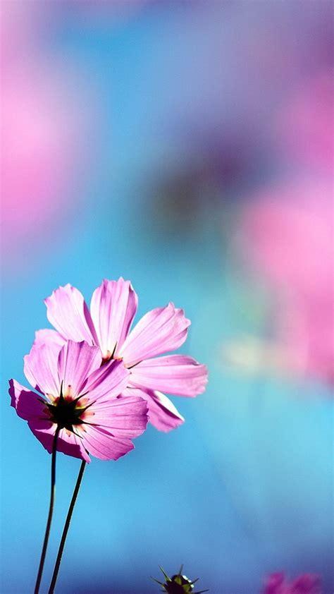flowers wallpaper flowers phone wallpapers  pink
