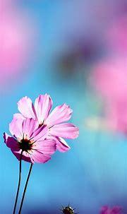 Flowers Wallpaper flowers phone wallpapers download pink ...