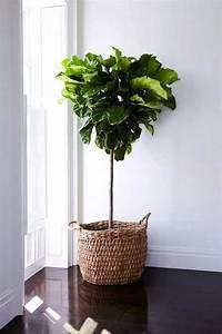 Zimmerpflanzen Für Schlafzimmer : 98 easy zimmerpflanzen f r zimmerpflanzen ~ A.2002-acura-tl-radio.info Haus und Dekorationen