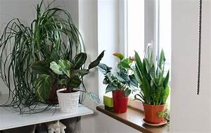 What, U2019s, Wrong, With, My, Houseplants, House, Plant, Problems, And, Solutions