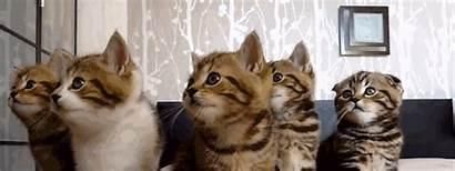 Kitten Animated Cat Friendly Kittens Esa Doctors