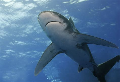 26 Beautiful Woman Attacked By Shark Off Cruise Ship | Fitbudha.com