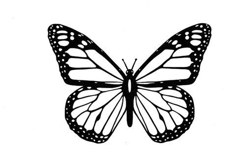 illustration butterfly black  white  image  pixabay