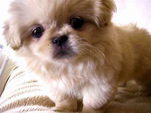 Cute Dog Breeds In India | Free HD Wallpapers