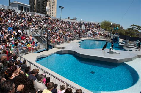 new york aquarium coney island guide