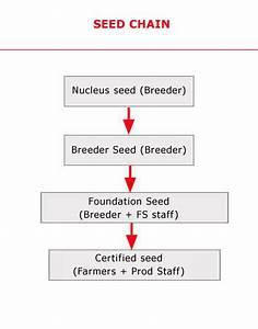 Seed Chain - Nu Genes Pvt. Ltd.