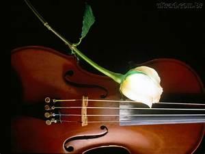 Quotes On Beautiful Violins. QuotesGram