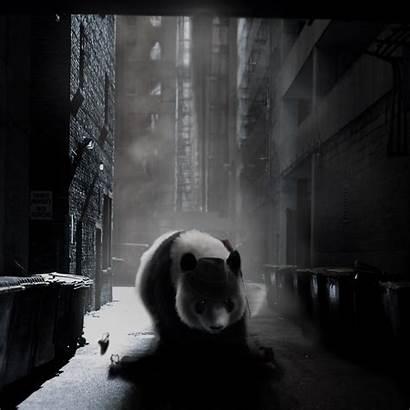 Nixx Mobster Panda Deviantart