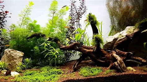 Aquascape Freshwater Aquarium by Aquarium Aquascape Freshwater Planted Fish Tank