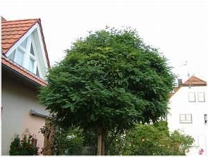 Bäume Für Den Garten : immergr ne b ume f r den garten hauptdesign ~ Lizthompson.info Haus und Dekorationen