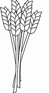 Wheat Grain Agriculture Farm Crop Cereal Pixabay Plant sketch template
