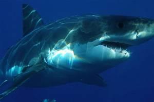 Great White Shark Fishing 101  In