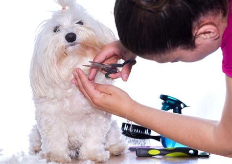 wie schneidet man hundehaare die  regeln der fellpflege