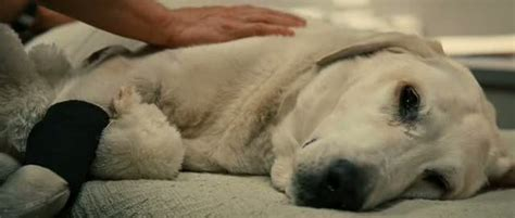 Dog Death Quotes Marley And Me