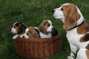 Vermi nei cuccioli appena nati