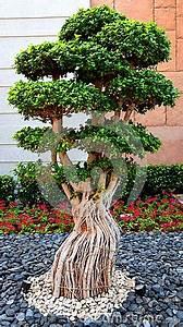 Kleiner Baum Garten : bonsaibaum im garten in atlantis dubai stockfoto bild ~ Lizthompson.info Haus und Dekorationen