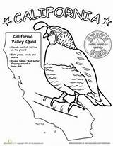 California Coloring Flag State Birds Bird Drawing Worksheets Canyon Grand Map States History Eye Kindergarten Science Sheets Worksheet Printable Facts sketch template