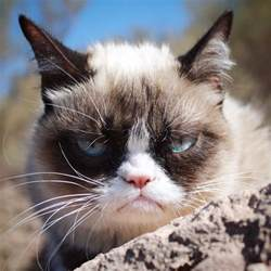 cat cat grumpy cat realgrumpycat