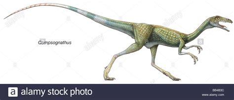 Compsognathus Stock Photos & Compsognathus Stock Images
