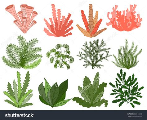 Image result for how to draw seaweed and coral | Art ...
