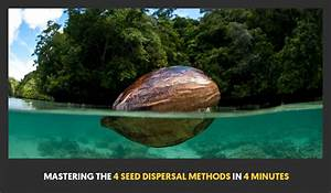 Mastering The 4 Seed Dispersal Methods In 4 Minutes